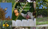 Beneficiaries of Pollination
