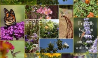 Friendly Garden Flowers and Trees with Seeds