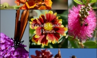 Friendly Garden Flowers
